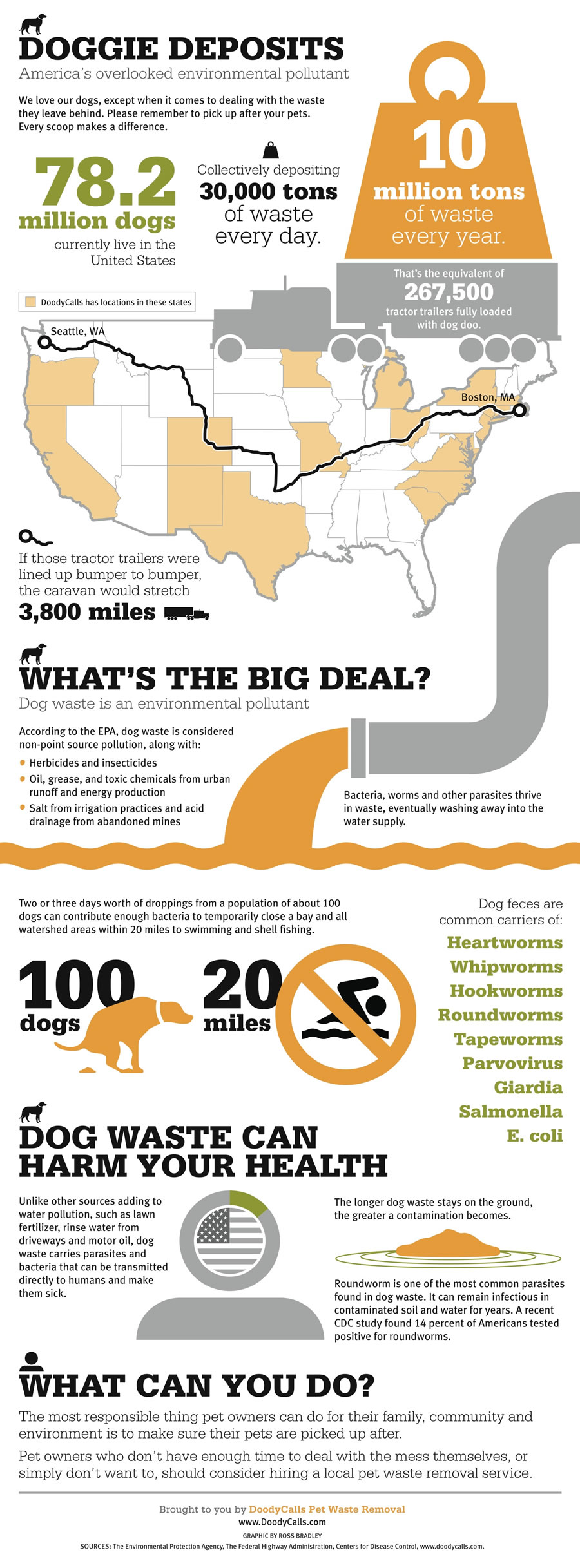 Cat Vs Dog Infographic